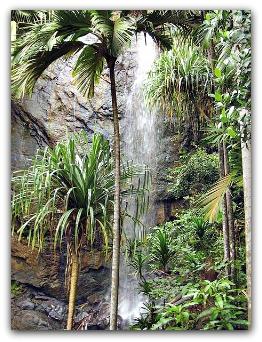 UNESCO World Heritage: Vallée de Mai, Praslin, Seychelles