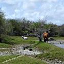 Bain Boeuf Wetland