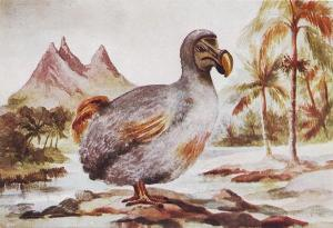 The Dodo bird in Mauritius